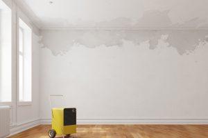 Jakie zagrożenia stwarza grzyb na ścianie ?