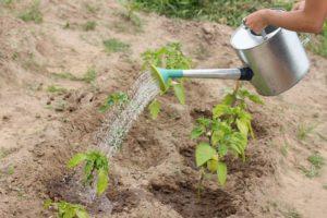 Ukorzeniacz w płynie – dobór i zasady stosowania