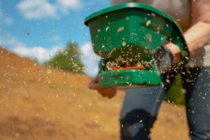 Jak można wykorzystać siewnik ręczny w ogrodzie?